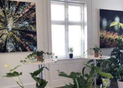 Velkomstrummet / Forrummet til Pejsestuen - med masser af grønne planter inden du går ind i Roskildes hyggeligste møderum